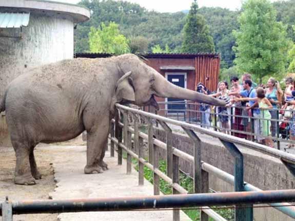 Bild Zoo di Pistoia